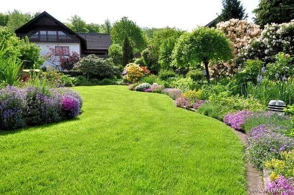 khu vườn sau khi diệt cỏ dại bằng giấm