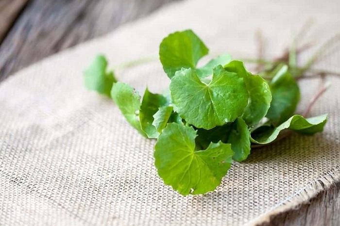 lợi ích của rau má đậu xanh - A TUẤN KHANG