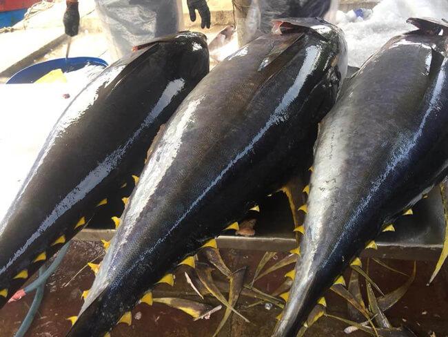 Nguyên liệu cá ngừ cho món cá kho
