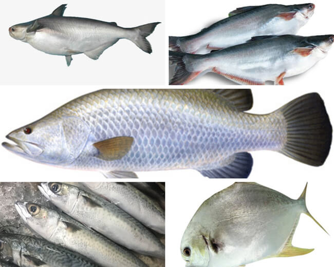 Các loại cá cho món kho