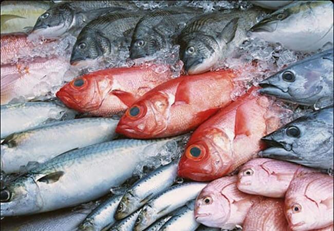 Cách lựa chọn cá bể đông lạnh