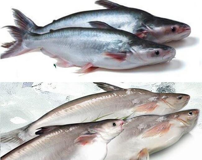 Các loại cá da trơn