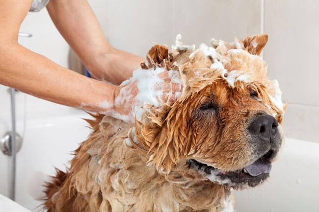 Khử mùi hôi ở chó với giấm