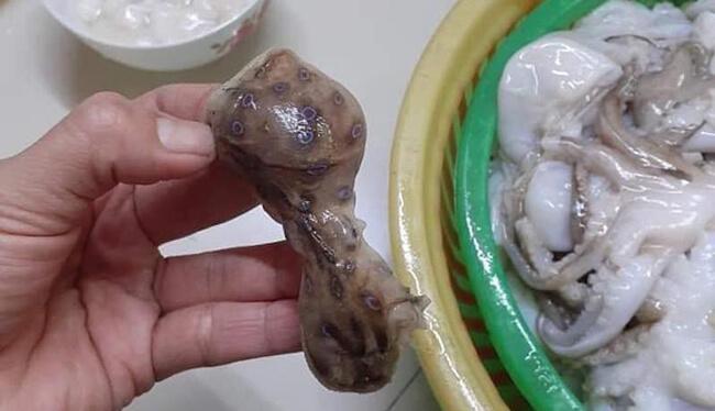 Không ăn bạch tuộc đốm xanh